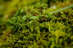 Het gevarieerde vegetatie groeien op bomen met verschillende vormen stock foto's