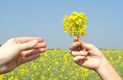 Het geven van bloemen Stock Afbeeldingen