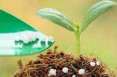 Het geven van chemische (Ureum) meststof aan jonge plant over groene rug Stock Foto's