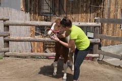 Het geven van een geneeskunde aan een poney Stock Foto