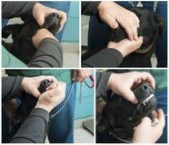 Het geven van geneeskunde aan een hond Royalty-vrije Stock Afbeeldingen