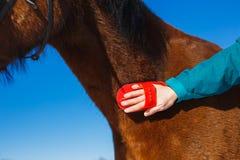 Het geven voor een paard in de lente Het borstelen van de hals met een plukselborstel royalty-vrije stock fotografie