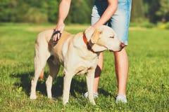 Het geven voor hond stock fotografie