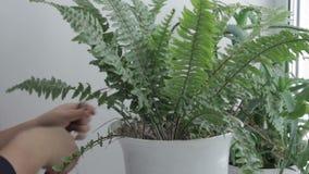 Het geven voor ingemaakte bloemen stock video