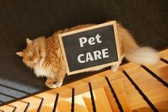 Het geven voor uw die huisdierenonderwerp met gemberkat wordt afgeschilderd royalty-vrije stock fotografie