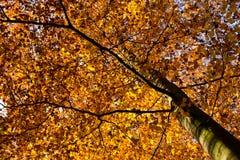 Het gevlekte licht van de de herfstzon Royalty-vrije Stock Foto's