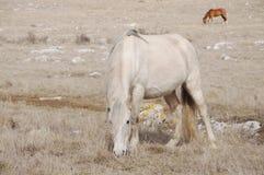 Het gevlekte paard Royalty-vrije Stock Foto's
