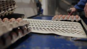 Het gevogeltearbeiders die van het kippenlandbouwbedrijf eieren sorteren bij fabriekstransportband De industriële productielijn v stock video