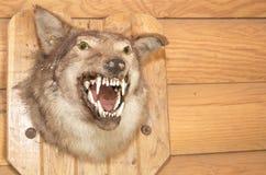 Het gevulde hoofd van de wolf Stock Afbeeldingen