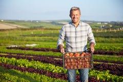 Het Gewas van landbouwerswith organic tomato op Landbouwbedrijf royalty-vrije stock afbeeldingen
