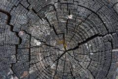 Het gezaagde hout scheurde de textuurachtergrond van de Berkboom stock foto's
