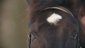 Het gezicht en de ogen van de zwarte paardclose-up, vlek op zijn voorhoofd stock videobeelden