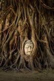 Het Gezicht van Boedha in Boom Royalty-vrije Stock Afbeelding
