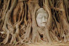 Het gezicht van Boedha in de boom Royalty-vrije Stock Fotografie