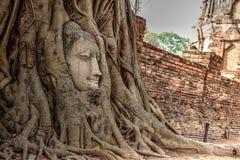 Het gezicht van Boedha in grote boom Stock Foto's
