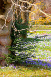 Het gezicht van de boom Stock Fotografie