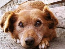 Het gezicht van de hond stock afbeeldingen
