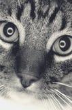 Het gezicht van de kat Royalty-vrije Stock Foto's