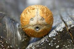 Het gezicht van de kokosnoot stock afbeeldingen