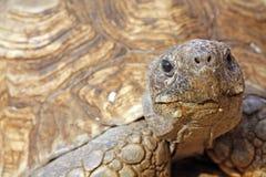 Het gezicht van de schildpad Royalty-vrije Stock Afbeelding
