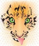 Het gezicht van de tijger Stock Fotografie
