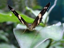 Het gezicht van de vlinder Royalty-vrije Stock Foto's