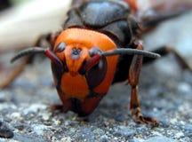 Het gezicht van het insect Royalty-vrije Stock Foto