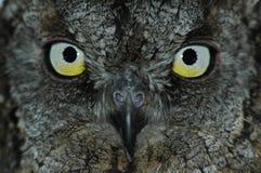 Het gezicht van Owl?s Royalty-vrije Stock Afbeeldingen