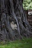Het gezicht van het standbeeld van Boedha stock fotografie