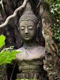 Het gezichts hoofddiegipspleister van Boedha door boom wordt behandeld Royalty-vrije Stock Foto's