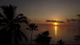 Het gezoem van zonsopgangpalmtrees binnen stock video