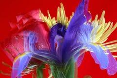 Het gezoemsamenvatting van de bloem Royalty-vrije Stock Afbeeldingen