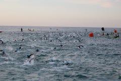 Het gezonde de oefening van de triatlon triathlete sport zwemmen Stock Foto