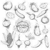Het gezonde ontwerp van de voedselschets met verse groenten Royalty-vrije Stock Foto's