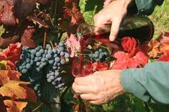 Het gieten van rode wijn royalty-vrije stock foto's