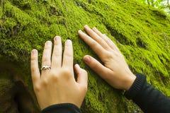 Het gladmaken van mos op een rots Royalty-vrije Stock Foto's