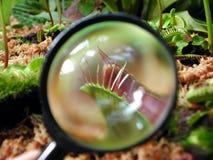 Het glas van Magnifier op een uiterst kleine installatie Royalty-vrije Stock Afbeelding