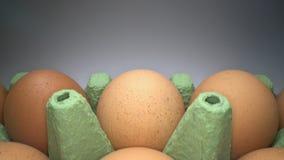 Het glijden door twee rijen van bruine eieren in kartondoos op witte achtergrond Kippeneieren in mand voor verkoop stock video