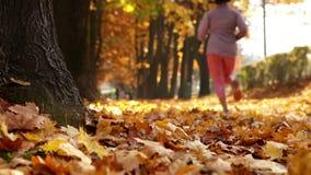Het glijden lengte: de vrouw stoot in het park in daling aan stock footage
