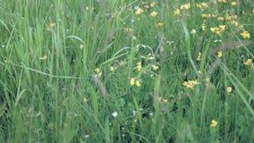 Het glijden over gras en wildflowers stock videobeelden