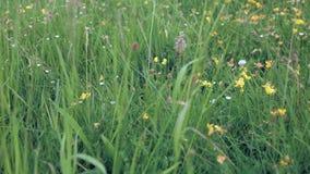Het glijden over gras en wildflowers stock video