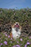 Het glimlachen in de tuin Royalty-vrije Stock Foto