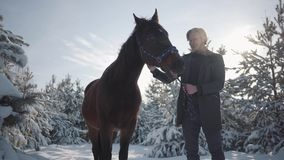 Het glimlachen het gebaarde mens strijken op hoofd aanbiddelijk bruin volbloed- paard die zich tussen sparren tegen de zon bevind stock footage