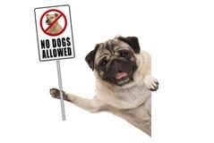 Het glimlachen pug puppyhond verbiedend steunen geen honden toegestaan teken royalty-vrije stock foto