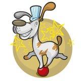 De hond van het circus op de bal Royalty-vrije Stock Foto's