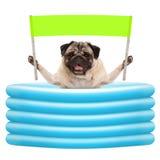 Het glimlachen van de zomerpug hond met groen bannerteken met in opblaasbare pool Stock Foto's
