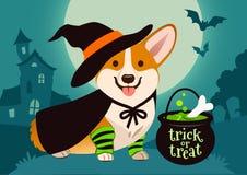 Het glimlachen van Halloween leuke Welse corgihond in heksenkostuum, zwart h royalty-vrije illustratie