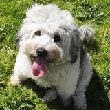 Het glimlachen van hond met grasachtergrond royalty-vrije stock foto's