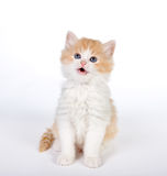 Het glimlachen van katje Royalty-vrije Stock Foto