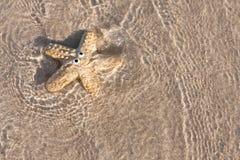 Het glimlachen van zeester op zand met duidelijke overzees Stock Afbeeldingen